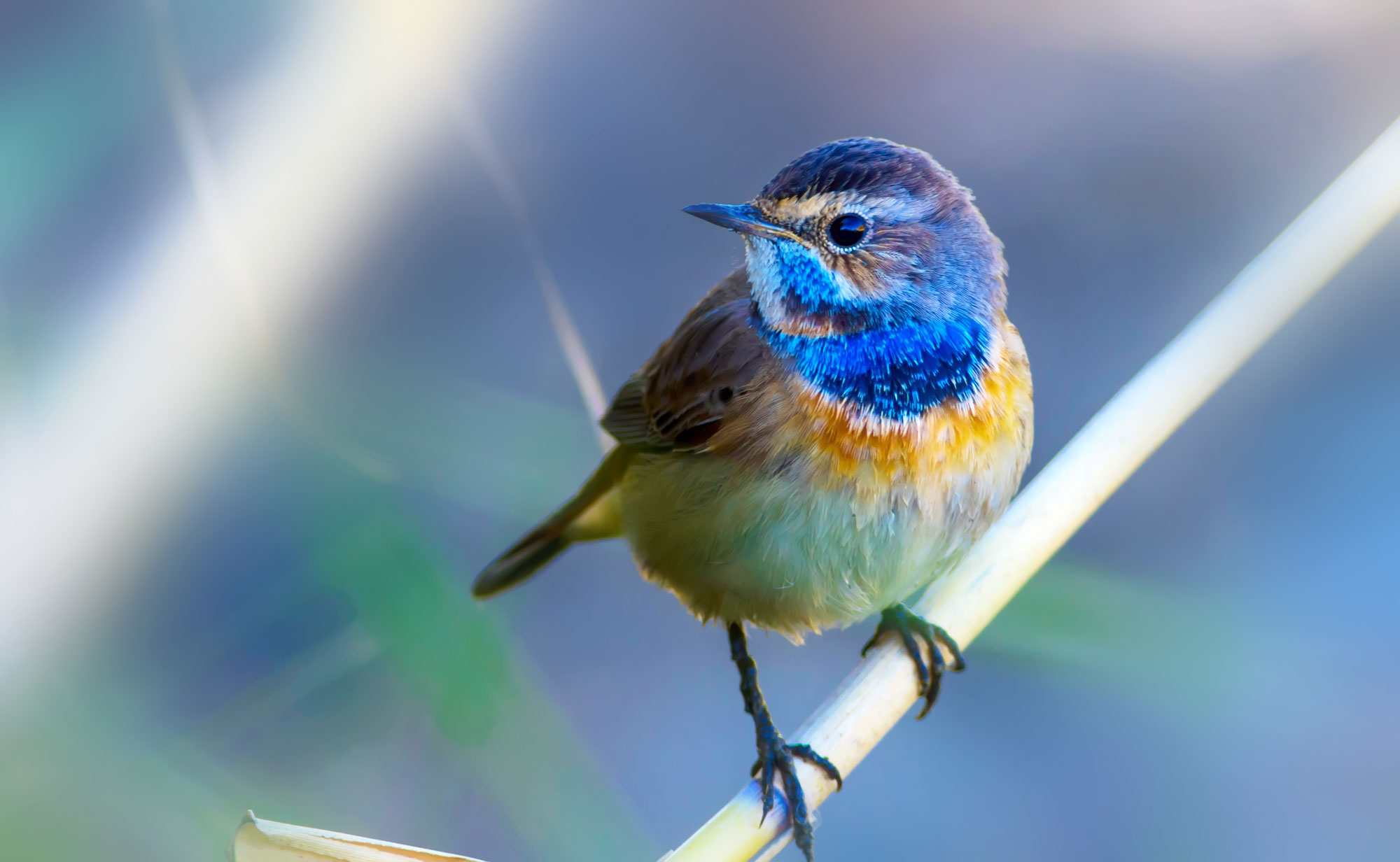 Backyard songbirds can make for great photos and you need not travel farther than your backyard!
