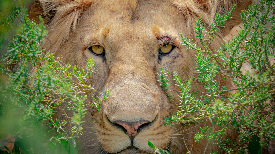 African Photographic Safari, Part 2: 9 Recommendations for Your Photo Gear