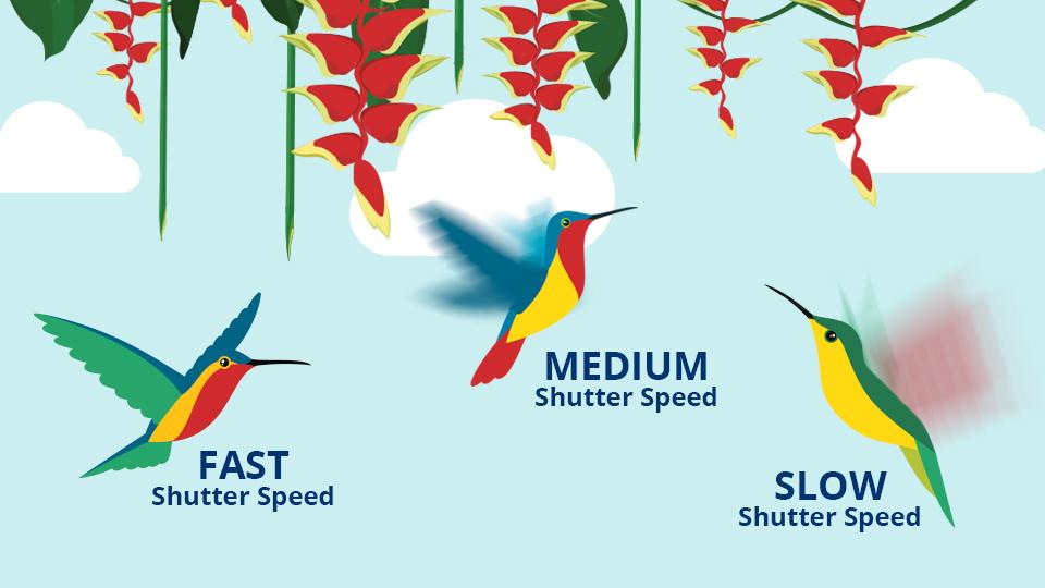 Shutterspeed Shutter Speed