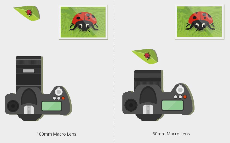 Macro Lens Buying Guide | B&H Explora