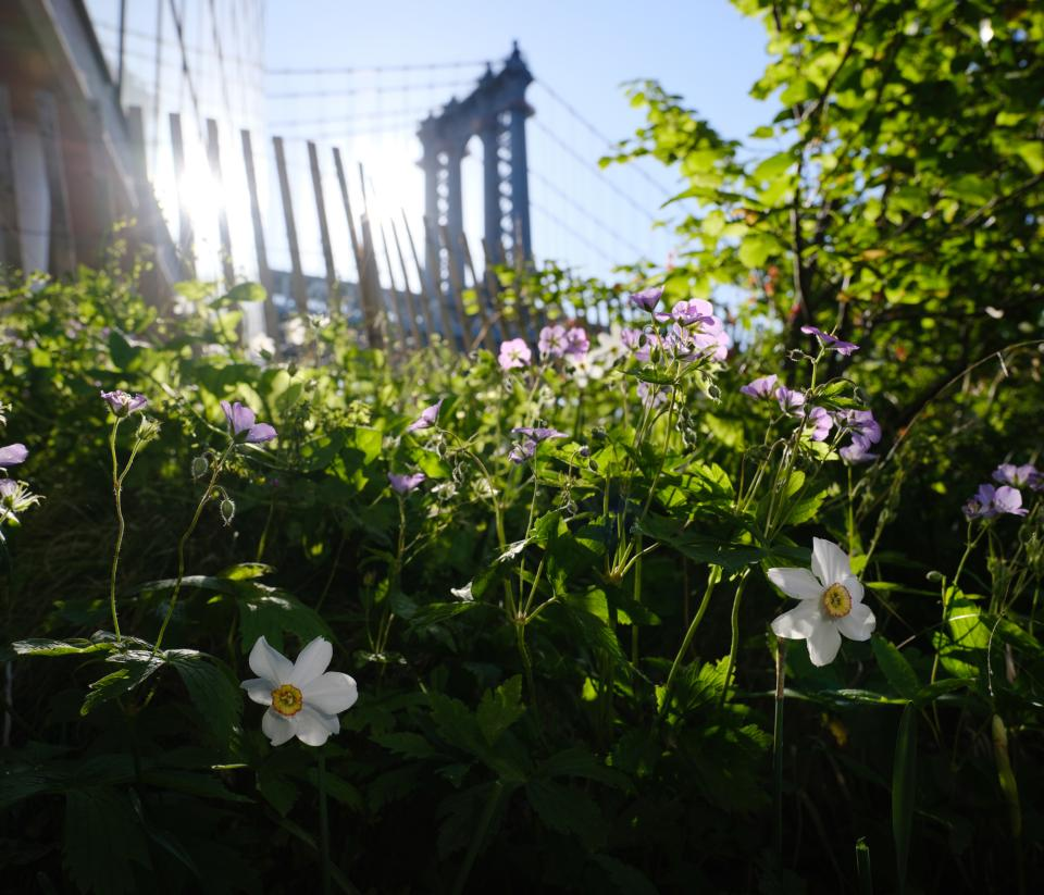 Flowers with the Manhattan Bridge in the background.