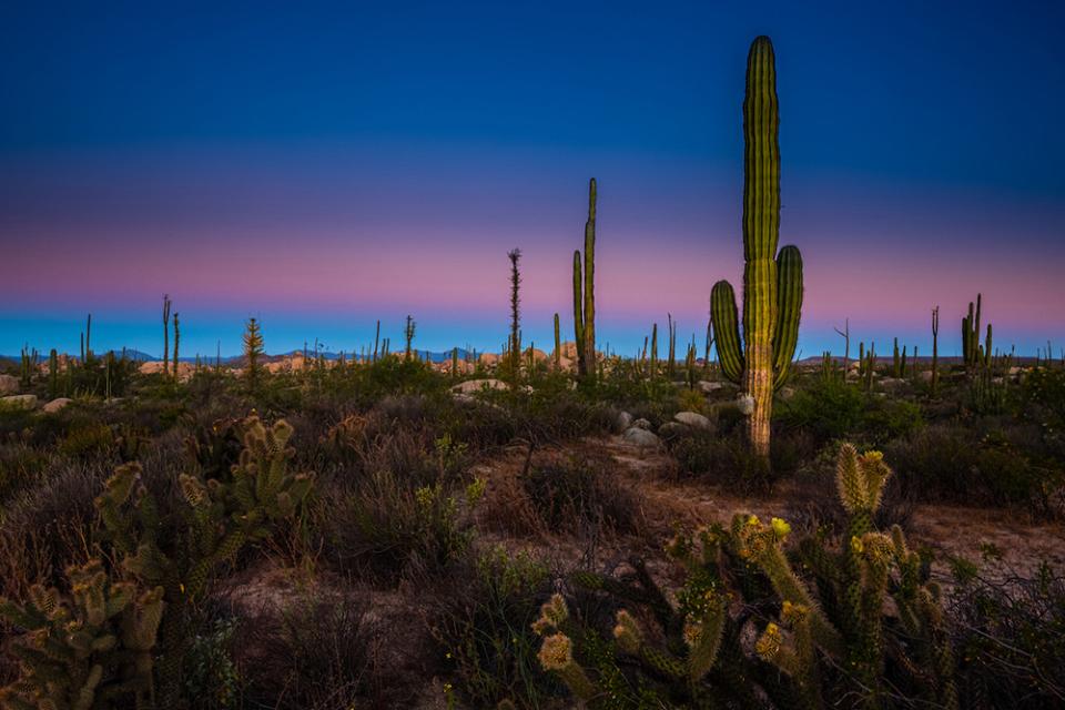 Cataviña Desert, Baja California, Mexico.  Canon EOS-1Ds Mark III, EF16-35mm f/2.8L II USM lens, f/16 for 2 seconds, ISO 100