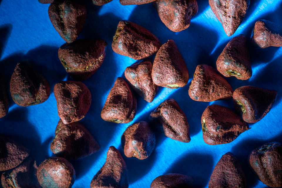 Same annatto seeds, same background as the previous photograph of Annatto seeds, but a harder, cooler light from a flashlight in place of the softer, warmer LED lamp head creates a totally different mood and feeling than the previous photograph of the same subject.