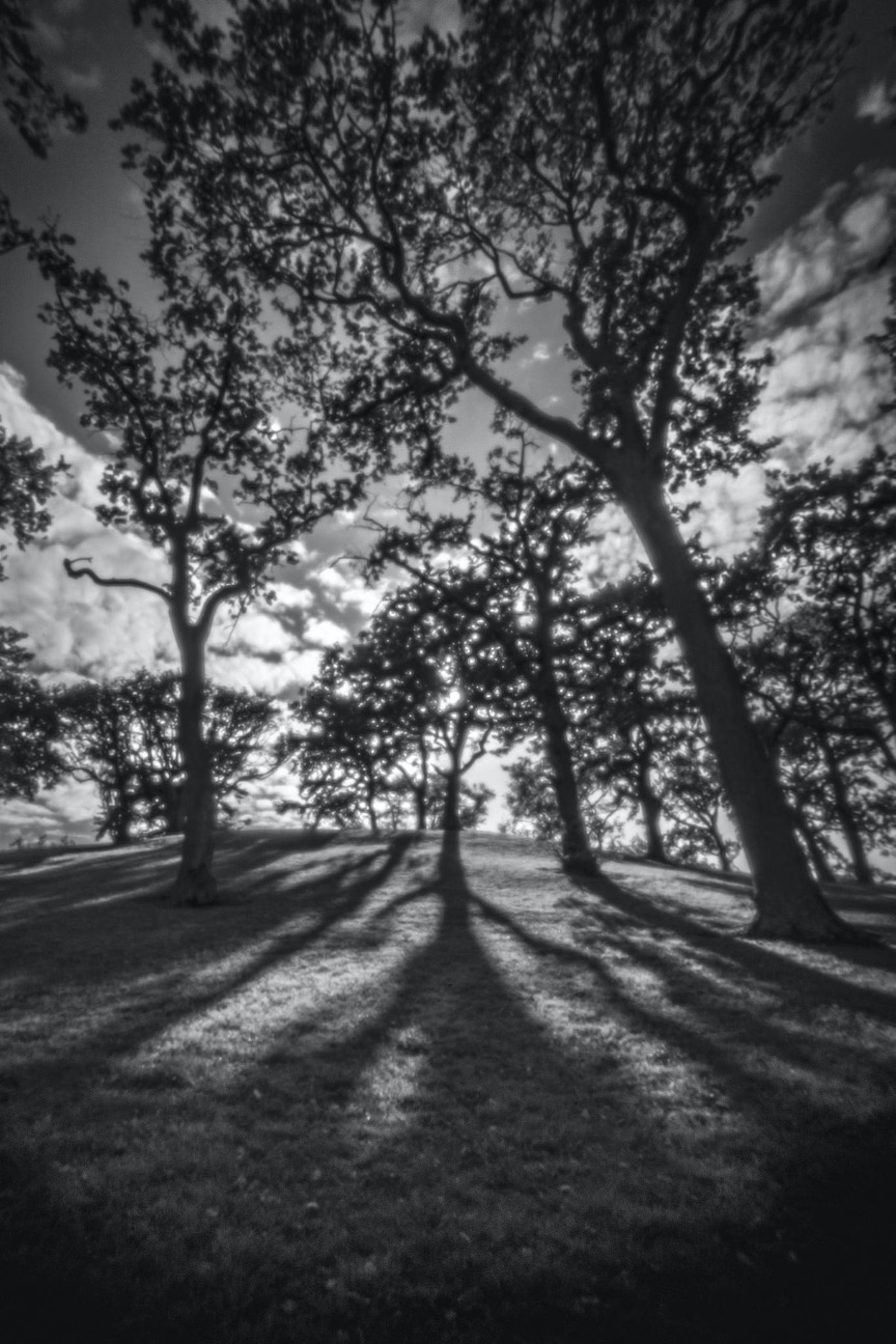 Lensbaby Camera Obscura | ISO 100 | 1/40 | Sony a7R IV