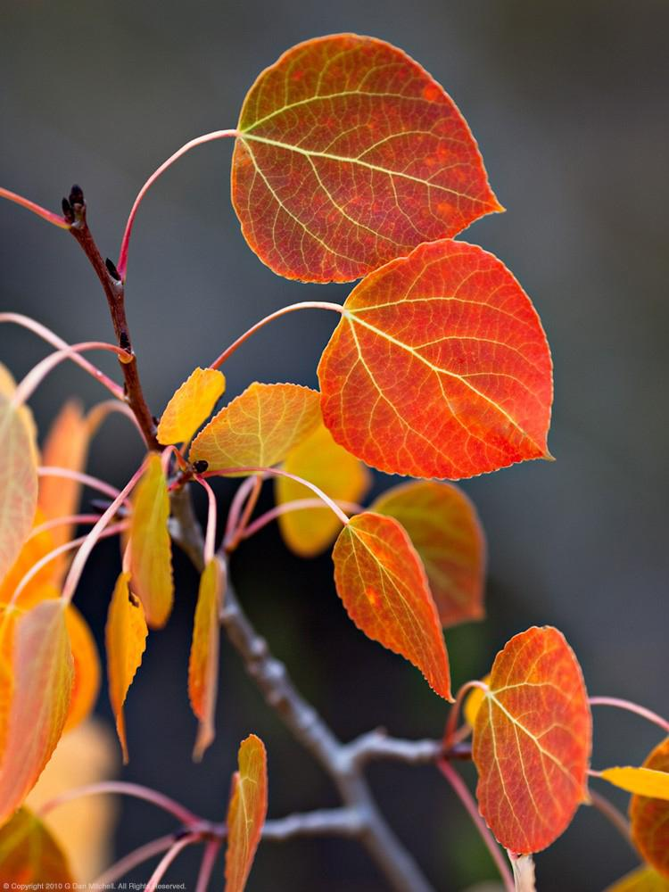 Photo Tips And Favorite Gear For Successful Fall Foliage Pictures B H Explora
