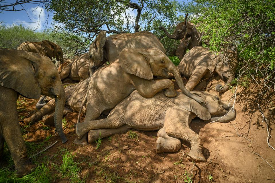 Thanks to the silent operation of her Nikon mirrorless camera, Amy Vitale was able to capture this candid scene of rescued elephants at play at the Reteti Elephant Sanctuary in northern Kenya.