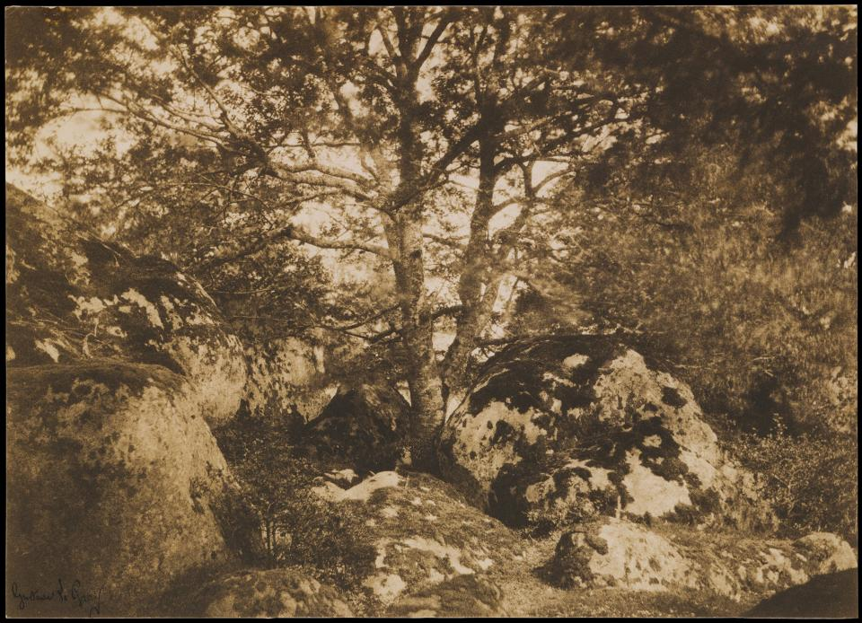 Gustave Le Gray, Oak Tree and Rocks, Forest of Fontainebleau, salted paper print, 1849-52