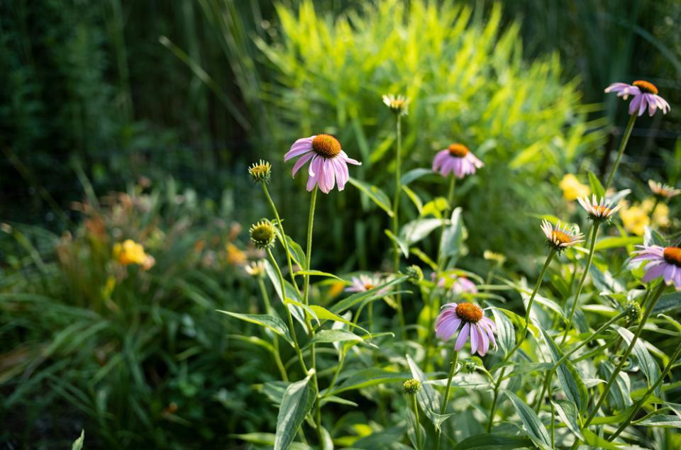 Purple Flowers in Prospect Park