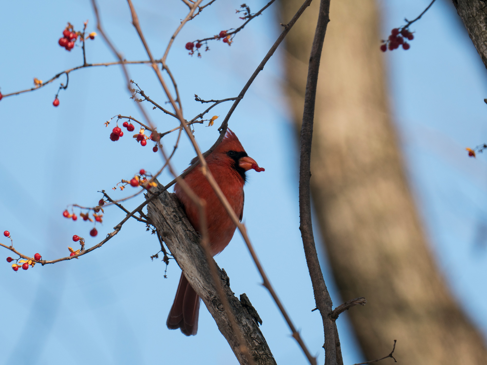 Birding in Brooklyn with the Panasonic G9 and Leica 200mm f/2 8 Lens
