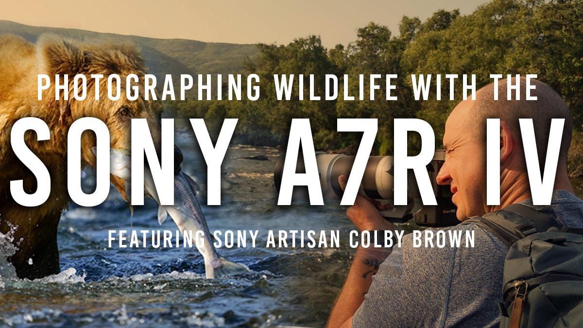 Sony a7RIV: The Best Camera for Wildlife Photography?